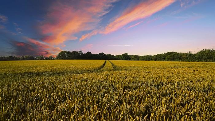 Poľnohospodárske plodiny a ich pestovanie